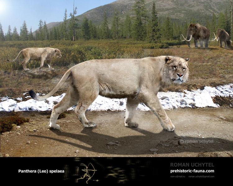 Panthera-Leo-spelaea