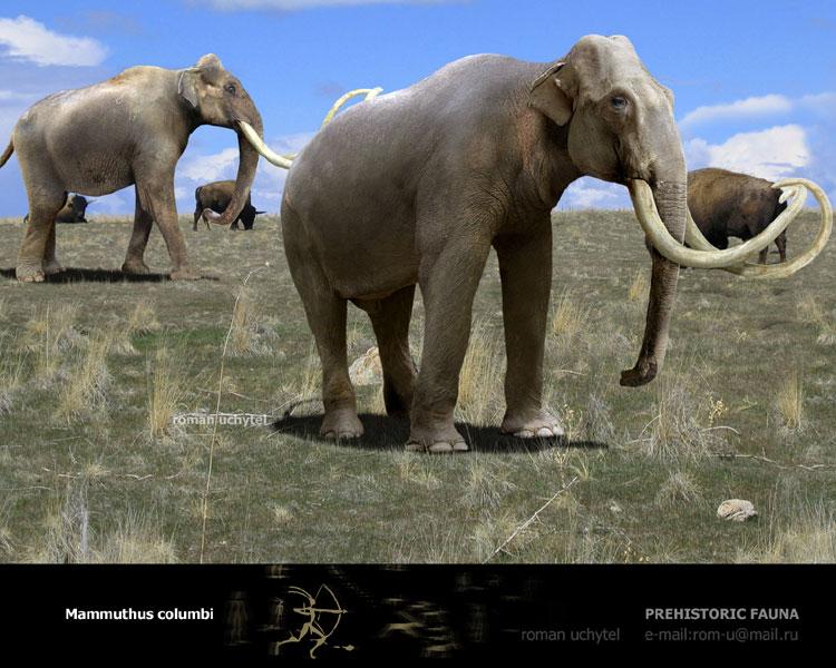 они заканчивались если слоны в южной америке надо