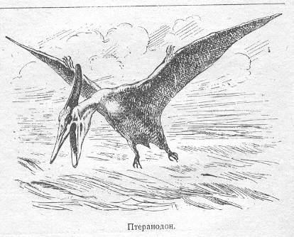 pteratodon1_bl.jpg (29902 bytes)