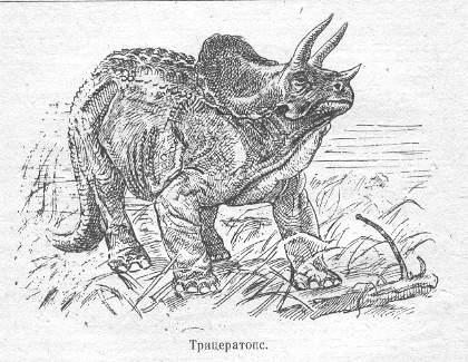 triceratops1_bl.jpg (36947 bytes)