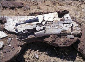 В начале палеогена еще существовали динозавры?