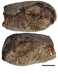 В Канаде обнаружен новый вид птерозавров
