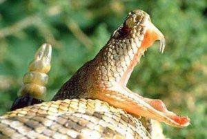 Зубы Uatchitodon из позднего триаса проливают свет на эволюцию ядовитых зубов змей