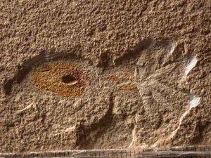 Осьминоги, аналогичные современным, существовали уже 95 миллионов лет назад