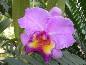 Орхидеи появились еще при динозаврах