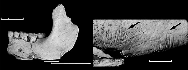 Челюсть из пещеры Эль-Сидрон с царапинами от каменных орудий— следами каннибализма. Фото из статьи Rosas et al., 2006